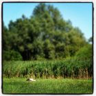 20130720_storch