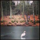 20140208_swan_lake