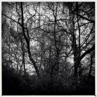 20140321_intothetrees