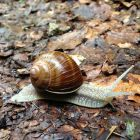 20140705_snailxing